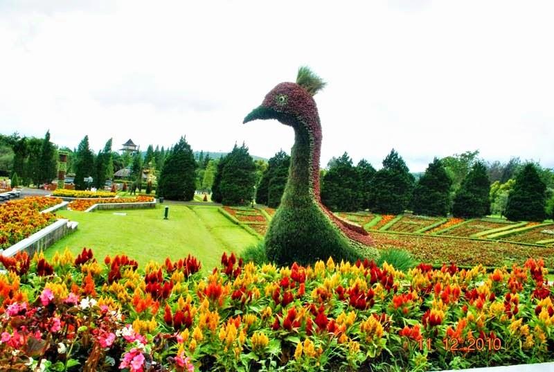Taman Bunga Nusantara Puncak Indonesia Sirb Travel Tours
